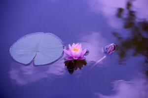 image article Comment retrouver la sérénité et la paix de l'esprit